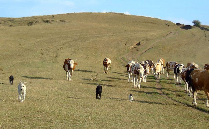 Како се финансира пољопривреда у Србији – текст за медије