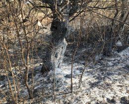 05 Ponjavica – Zapaljeno drvece 2