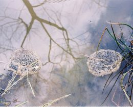 02 Jaja sumske zabe (Rana dalmatina)