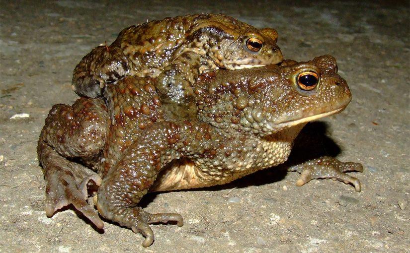 Пољопривредници могу помоћи у опстанку жаба