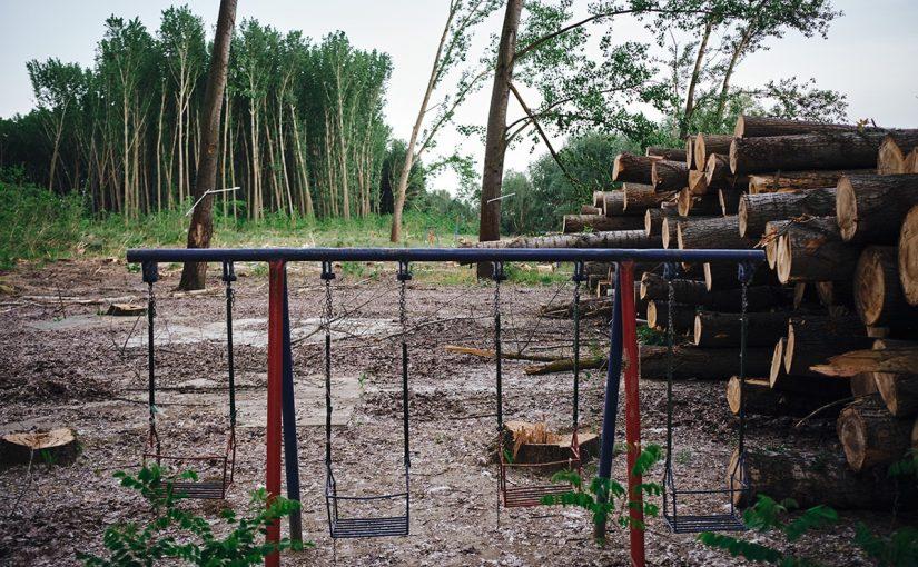 """(Srpski) Мрежа """"Пошумимо Војводину"""": Плантажа клонске тополе није шума"""