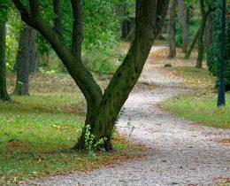 09 Udaljene staze – Gradski park u Vrscu